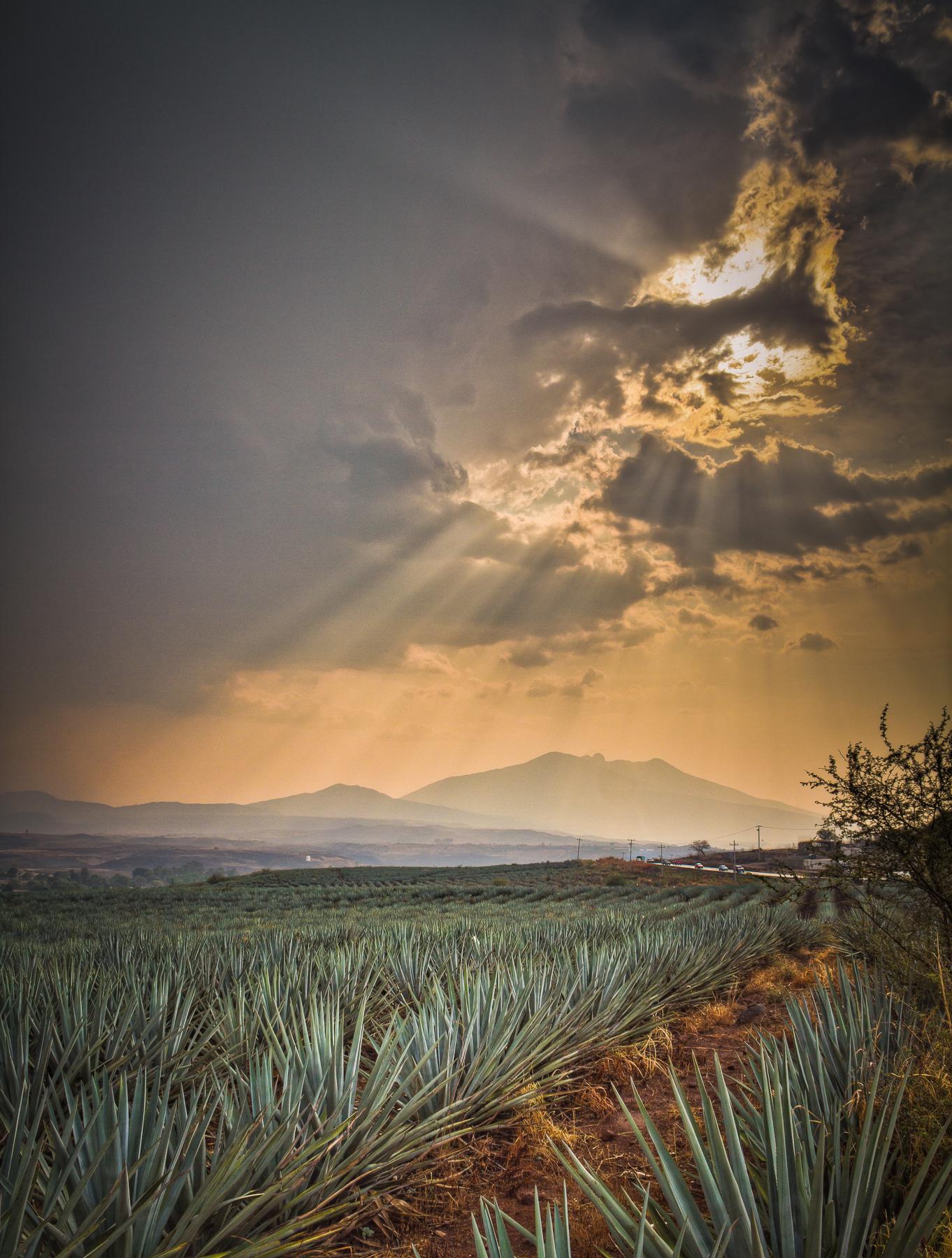 Paisaje Agavero - Tequila, Jalisco.